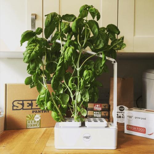 tolle halbgroße pflanzen weihnachtsgeschenke basteln