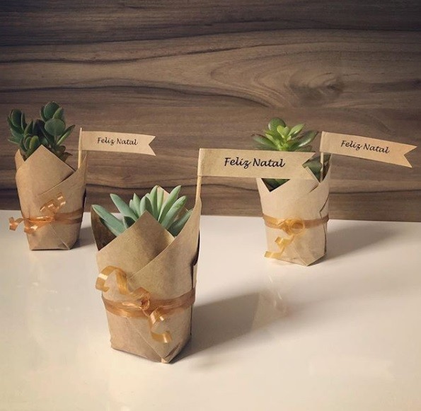 make great cactus Christmas presents