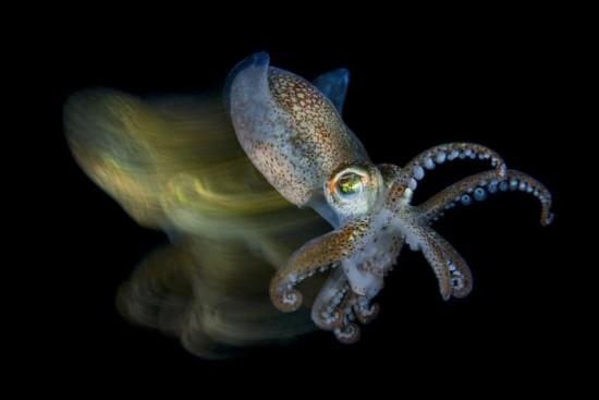 """2018 Ocean Art Contest 3. Platz Fabio Iardino """"Speedy Cuttlefish"""", Kuttelfisch"""