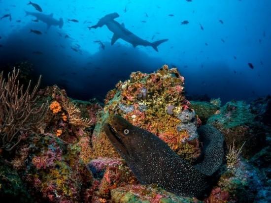 """2018 Ocean Art Contest Pier Mane """"From Beneath"""", Feingepunktete Muräne"""