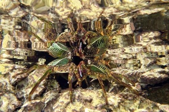 "2018 Ocean Art Contest Jack Berthomier ""Reflection of a Crab"", Ouemos Bucht, Noumea, Neukaledonien"
