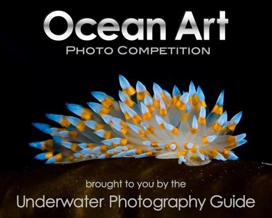 2018 Ocean Art Contest Sieger – hier sind die besten Unterwasserfotos des Jahres