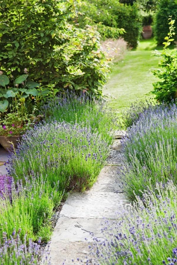 Gartengestaltung Ideen schön duftender lavendel beiderseits des steinernen Gartenwegs