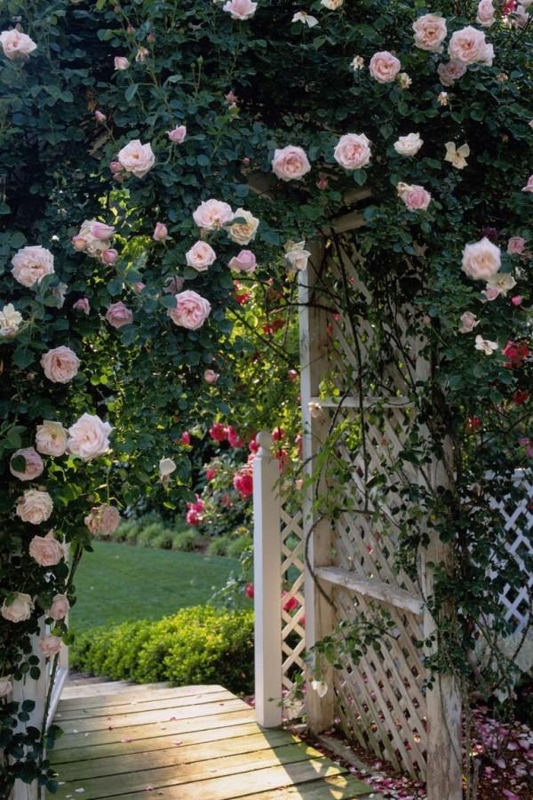 Gartengestaltung Ideen schöne Rosen verschiedene Farben andere Blumen viel Grün