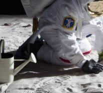 Großer Schritt für die Menschheit: Erste Pflanzen keimen auf der Mondrückseite