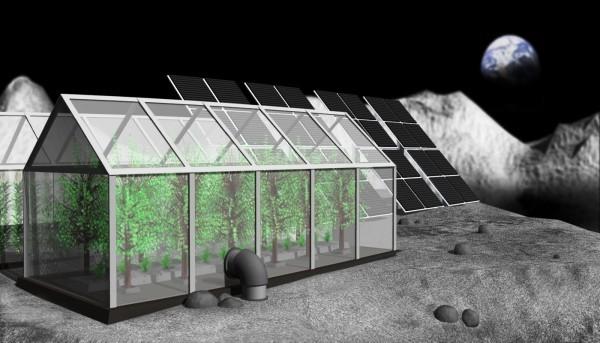 Großer Schritt für die Menschheit Erste Pflanzen keimen auf der Mondrückseite die zukunft der menschheit