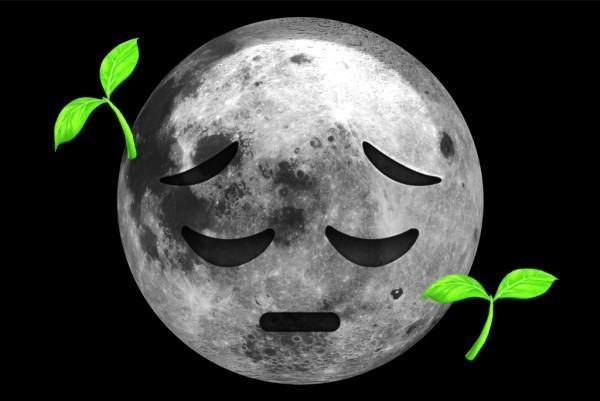 Großer Schritt für die Menschheit Erste Pflanzen keimen auf der Mondrückseite unglücklicher mond pflanze