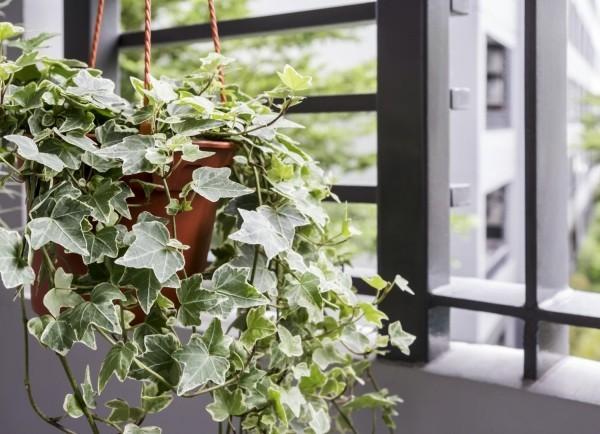 kr uter gegen husten welche heilpflanzen lindern das halsweh fresh ideen f r das interieur. Black Bedroom Furniture Sets. Home Design Ideas