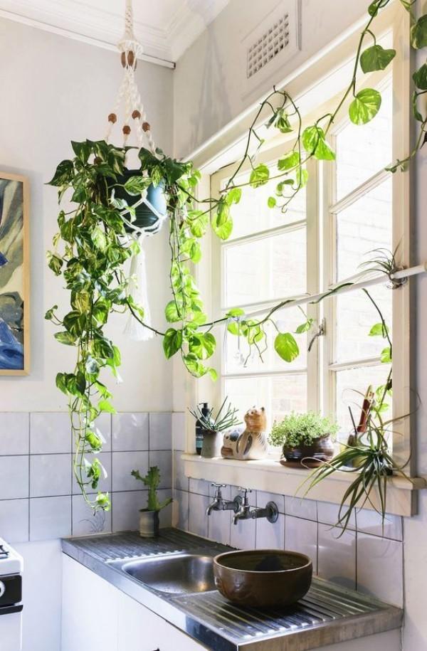 Natur ins Haus holen Efeu in der Küche weitere Grünpflanzen am Fenster