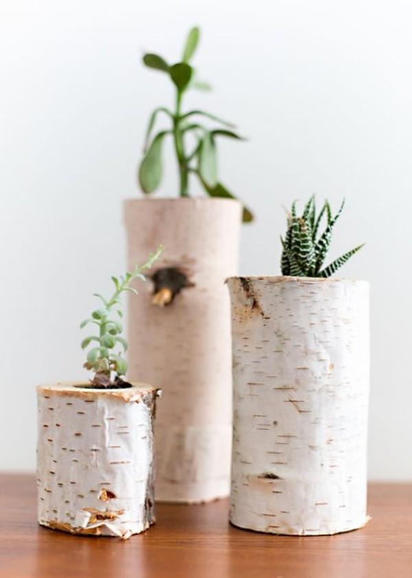 Natur ins Haus holen Pflanzbehälter aus Birkenholz pflegeleichte Grünpflanzen