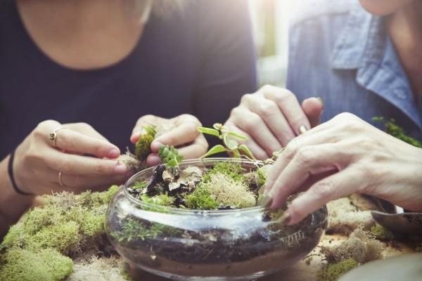 Pflanzen Terrarium selber gestalten keine schwere Aufgabe