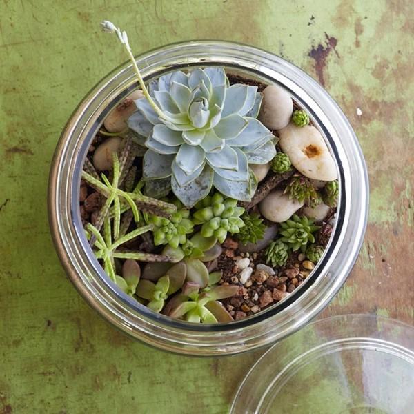 Terrarium Pflanzen haben dieselben Licht-und Wasserbedürfnisse