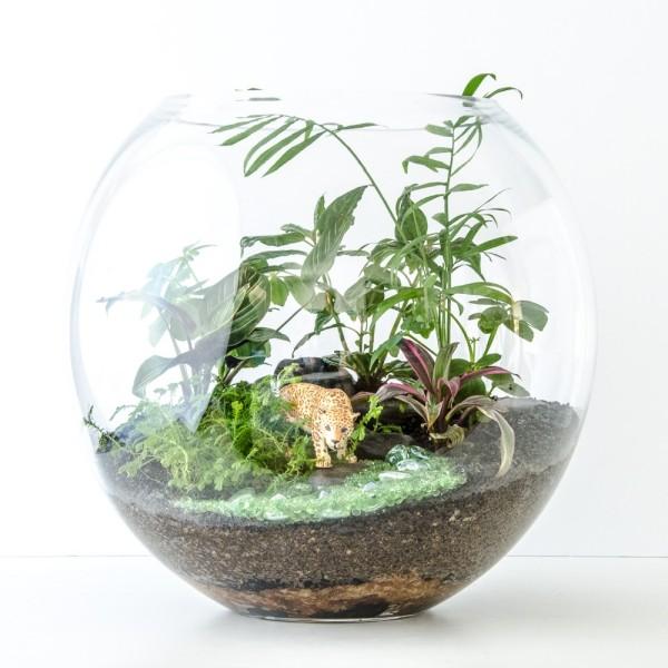 Terrarium Pflanzen mit denselben Licht-und Wasserbedürfnissen