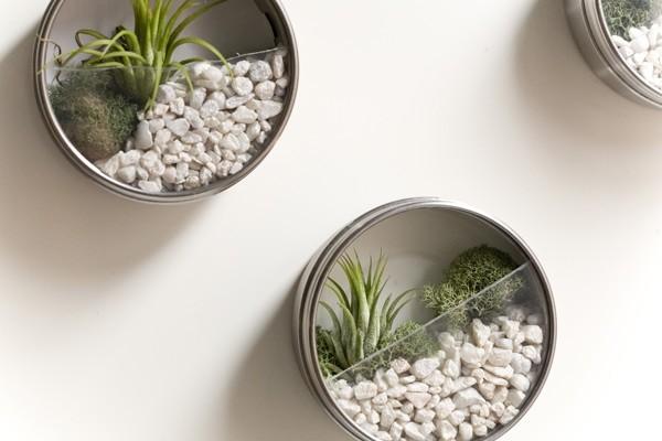 Terrarium Schichtsystem sonst verfaulen die Pflanzen