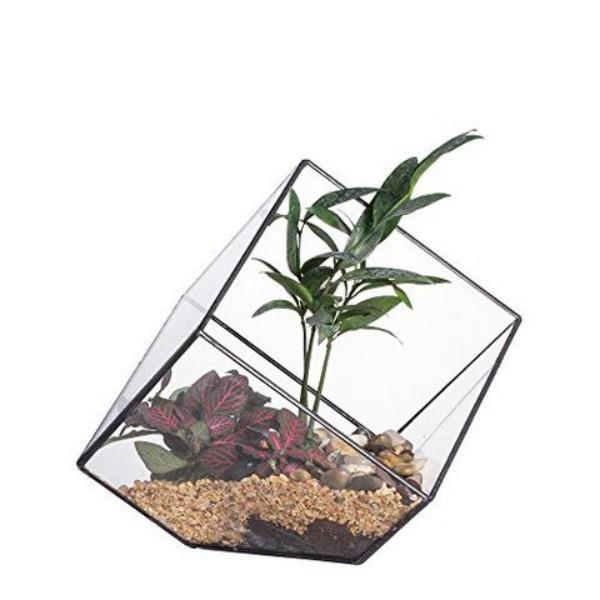Terrarium ausgefallener Glasbehälter toller Blickfang im Raum