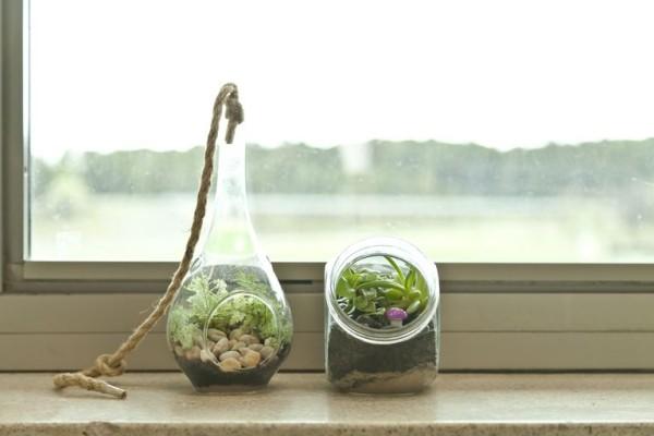 Terrarium gut selektierte Pflanzen passen sich an Wasser und Licht Bedingungen gut