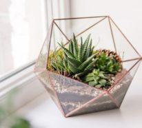 Was Sie für ein Terrarium zuhause wirklich brauchen?