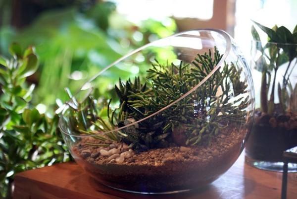 Terrarium schöne Fensterbank Deko mit grünen Pflanzen