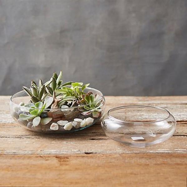 Terrarium schmücken mit kleinen Steinen und Muscheln