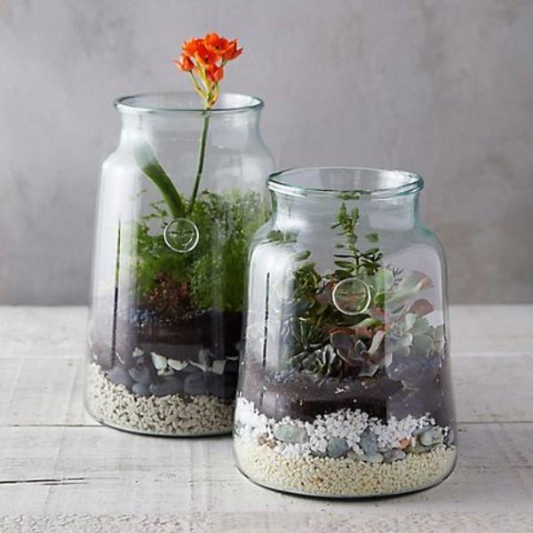 Terrarium zu Hause Gläser mit verschiedene Pflanzen in Szene setzen