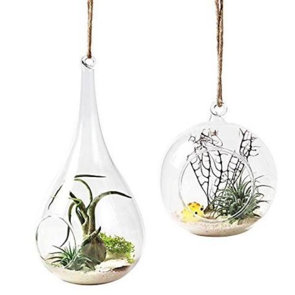 Terrarium zu Hause pflegeleichte Pflanzen auswählen