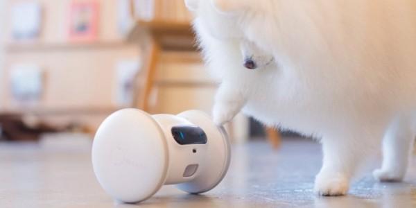 smart home gadgets fitness robot haustier