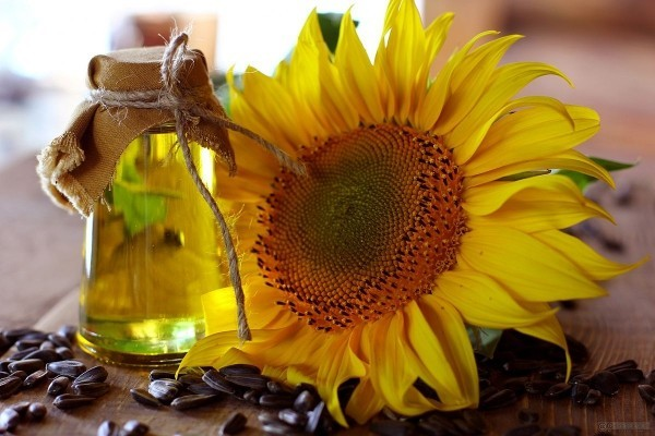 tolle sonnenblumen gesundes leben