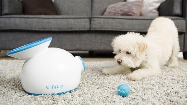 Die besten Smart Home Gadgets für Haustiere ifetch wirft bälle für ihren hund
