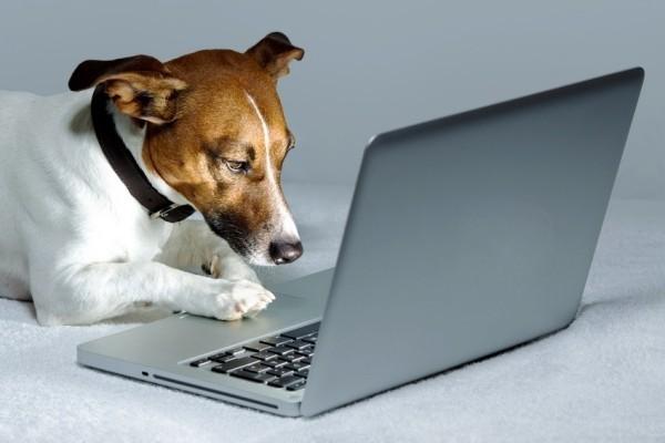 Die besten Smart Home Gadgets für Haustiere jack russel terrier benutzt laptop