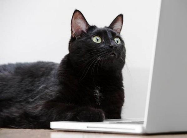 Die besten Smart Home Gadgets für Haustiere katze benutzt laptop
