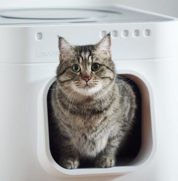 Die besten Smart Home Gadgets für Haustiere lavviebot intelligentes katzenklo