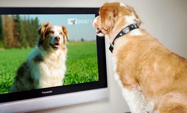 Die besten Smart Home Gadgets für Haustiere petchatz dogtv hd fernsehen für hunde