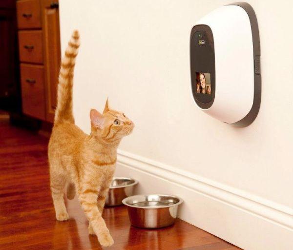 Die besten Smart Home Gadgets für Haustiere petchatz kommunikation mit der katze und hund