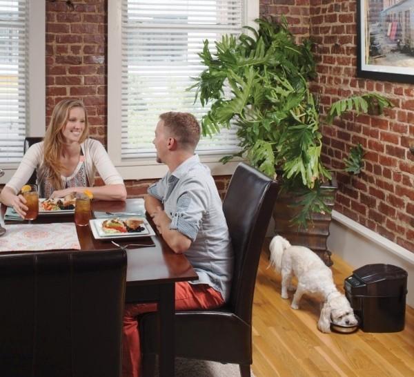 Die besten Smart Home Gadgets für Haustiere petsafe automatischer futterautomat für hunde und katzen