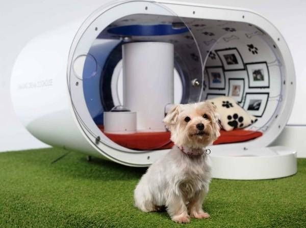 Die besten Smart Home Gadgets für Haustiere samsung smart hundehaus