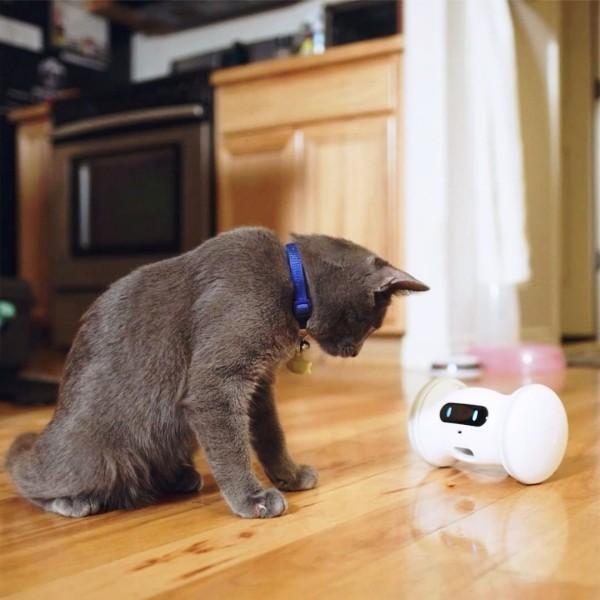 Die besten Smart Home Gadgets für Haustiere varram roboter hält hunde und katzen glücklich