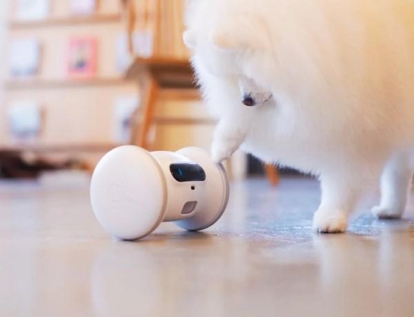 Die besten Smart Home Gadgets für Haustiere varram roboter zum spielen und beschäftigen
