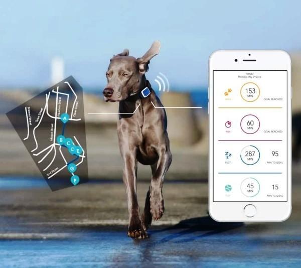 Die besten Smart Home Gadgets für Haustiere whistle 3 gps für hunde und katzen