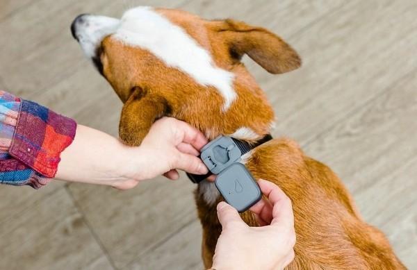 Die besten Smart Home Gadgets für Haustiere whistle 3 gps für hunde
