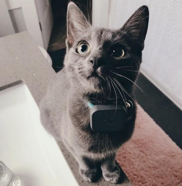 Die besten Smart Home Gadgets für Haustiere whistle 3 gps für katzen