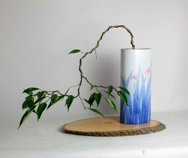 Ficus Benjamini Vermehrung durch Stecklinge
