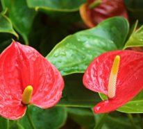 Diese Pflanzen sind echte Glücksbringer!