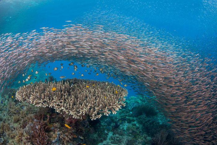 brücke aus tollen fischen unterwasserbilder