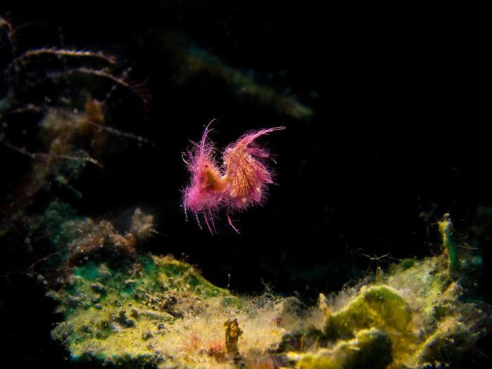 bunte farbakzente unterwasserbilder
