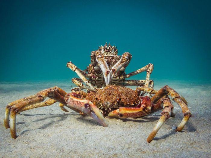 ein tolles wesen am meeresboden unterwasserbilder
