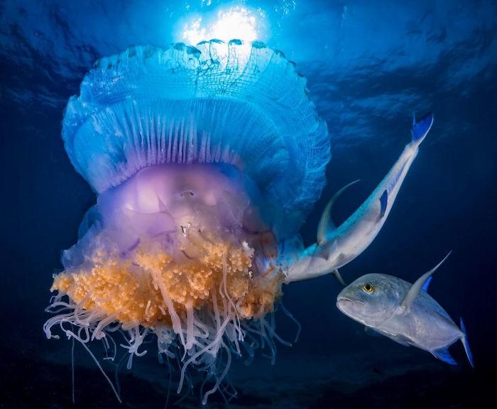 ein weichtier unterwasserbilder mit einem fisch