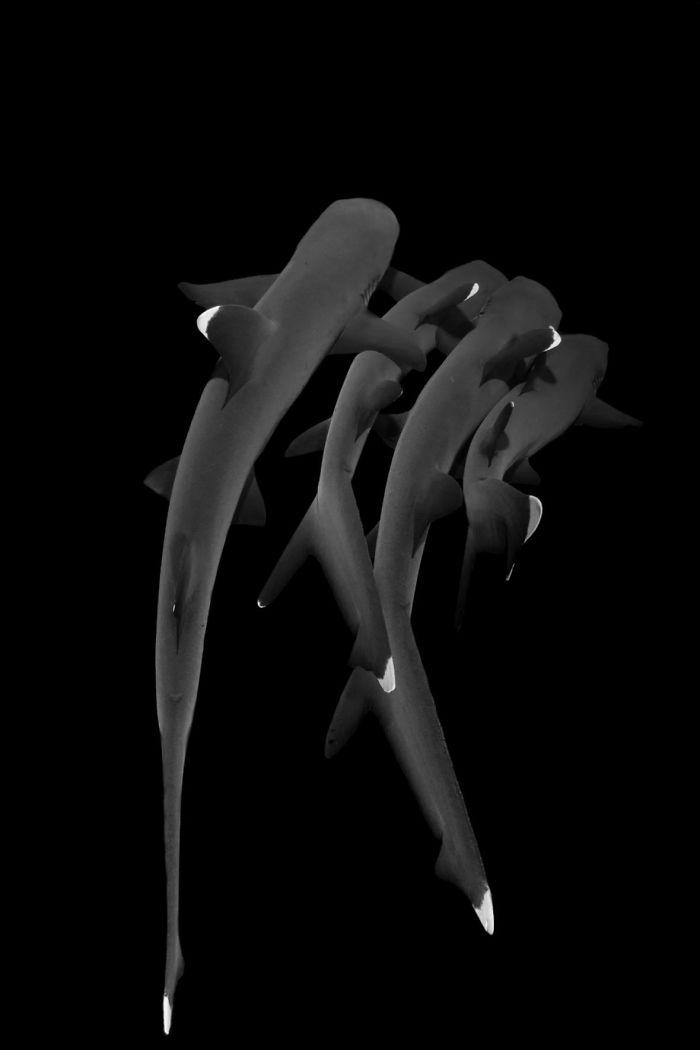 elegantes bild mit fischen unterwasserbilder
