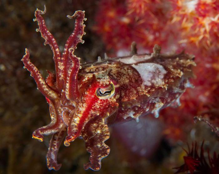extravagante weichtiere unterwasserbilder