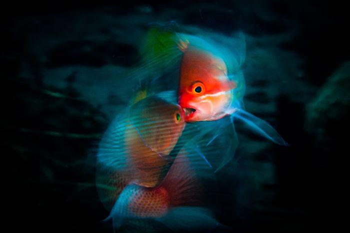 fische mit roten bildern unterwasserbilder