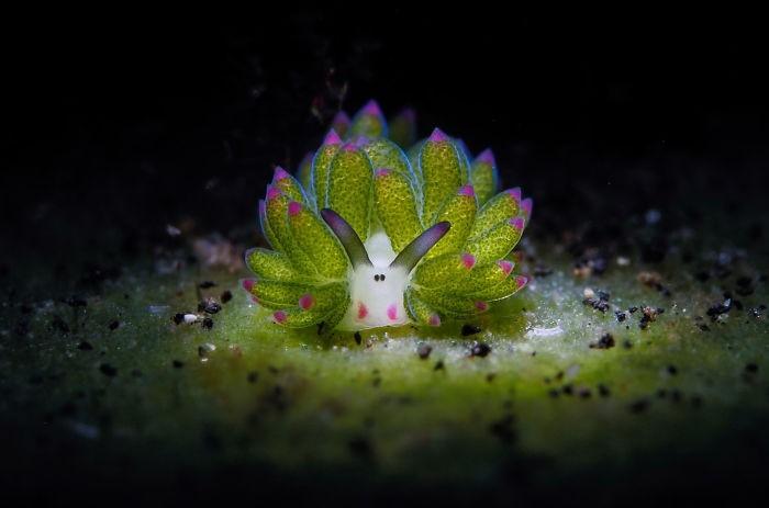 kleines wesen - tolle unterwasserbilder